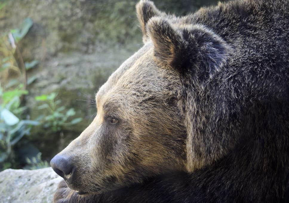Bear bottom salvage