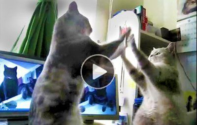 Youtube funny cats playing pattycake