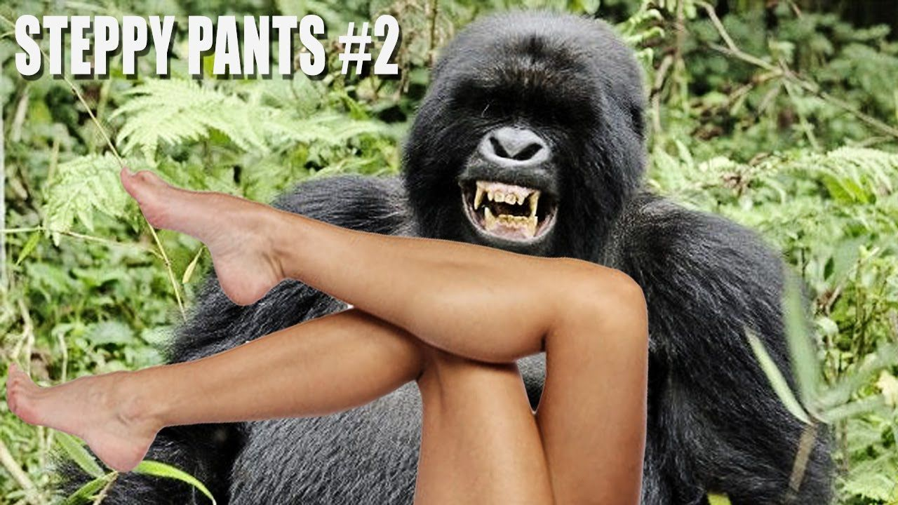 Free Ape Sex Videos human sex with gorilla free pics - best porno. comments: 1