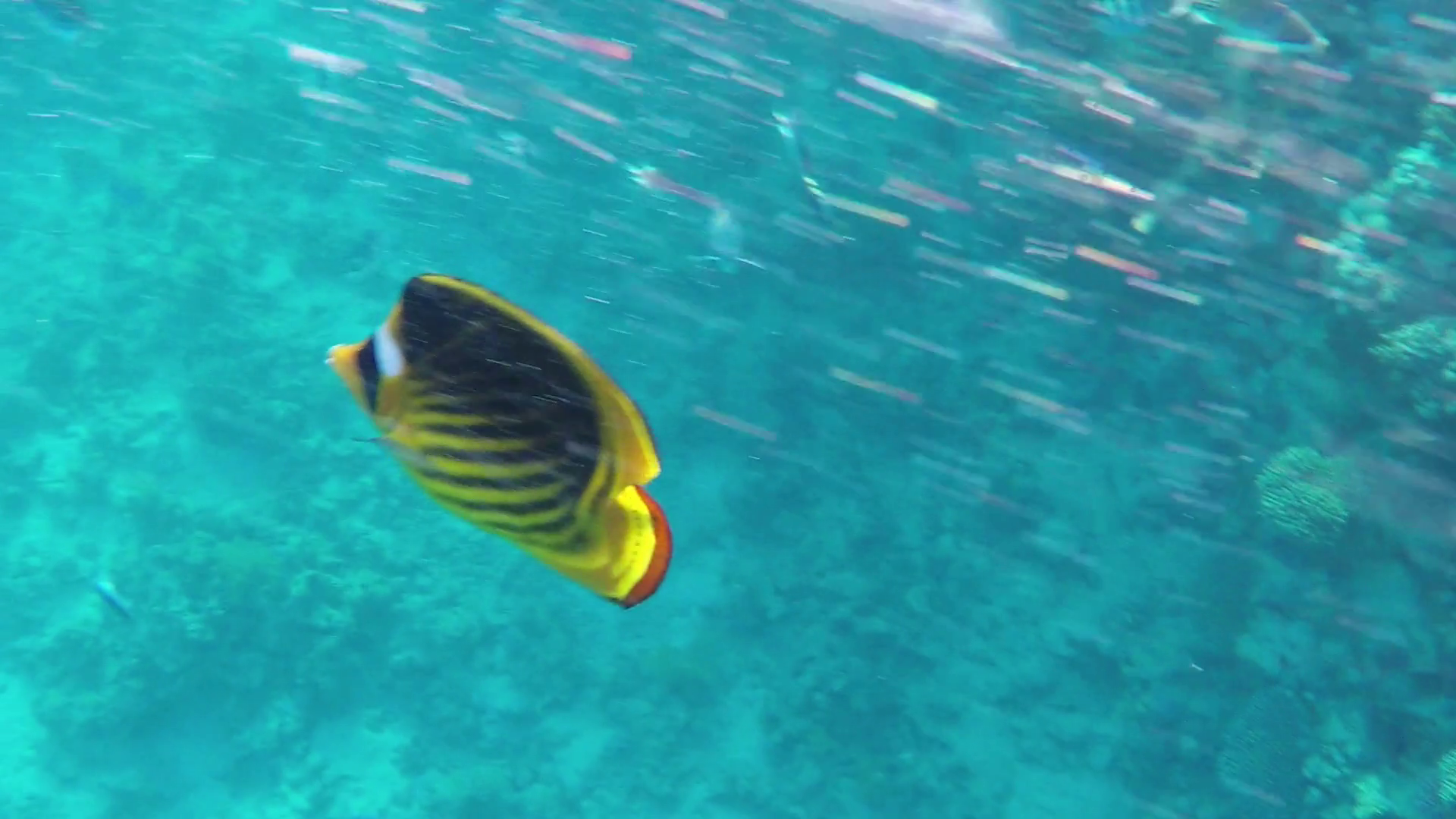 black and yellow striped fish nude gallery