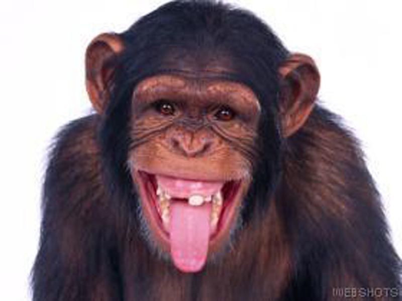 best of Pictures Funny chimpanzee