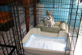 best of Puppy peeing Crate in
