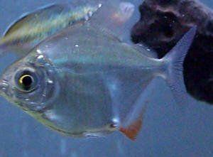 best of Gel Anus fishy