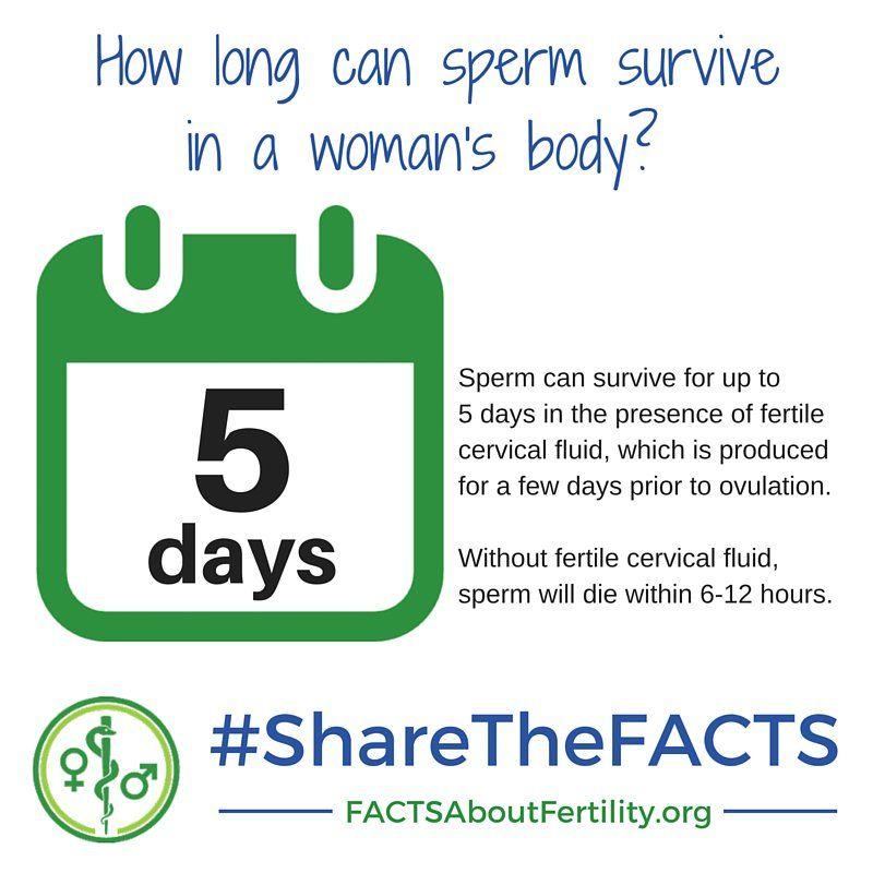 5 day sperm survive
