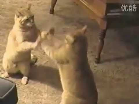 best of Funny cats playing pattycake Youtube