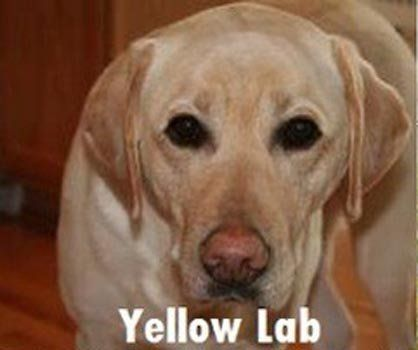 best of A joke meth lab How to identify