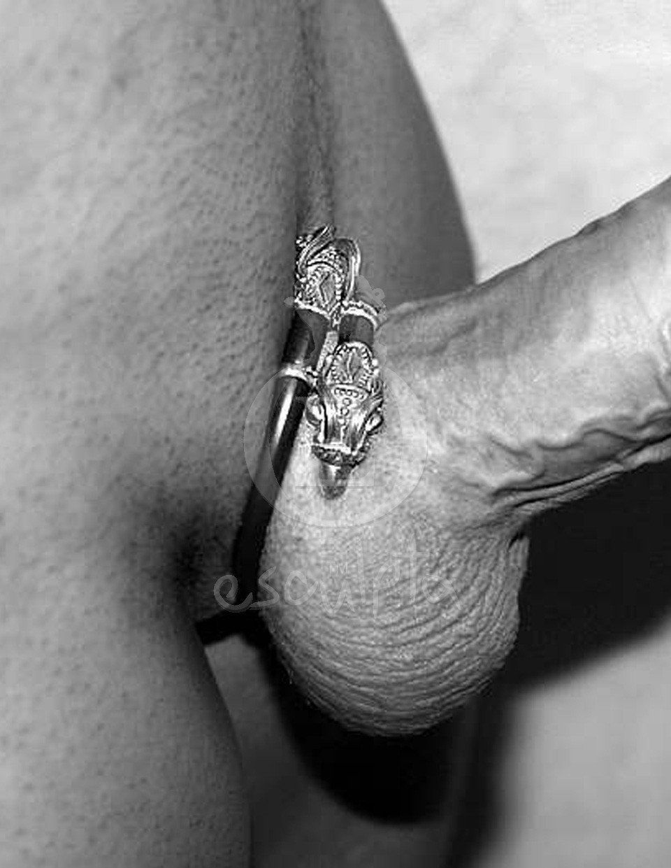best of Ring pics cock Large my thru