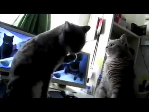 Icecap reccomend Youtube funny cats playing pattycake