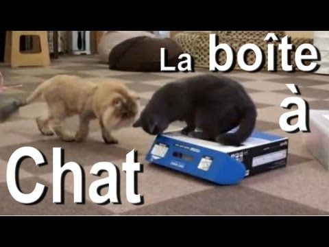 Creature reccomend Youtube funny cats playing pattycake